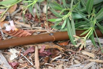 Rainbird Dripline Tropfrohr XFD2333100 Tropferabstand 33cm Länge 100m Bild 2